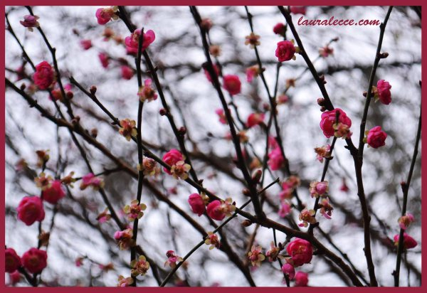 Blossoms - Photograph by Laura Lecce