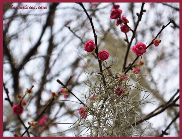 Confused Blossoms - Photograph by Laura Lecce