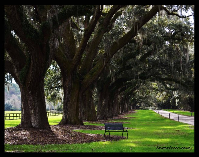 Oak Avenue Bench - Photograph by Laura Lecce