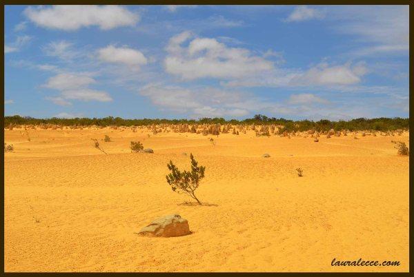 Pinnacles Desert - Photograph by Laura Lecce