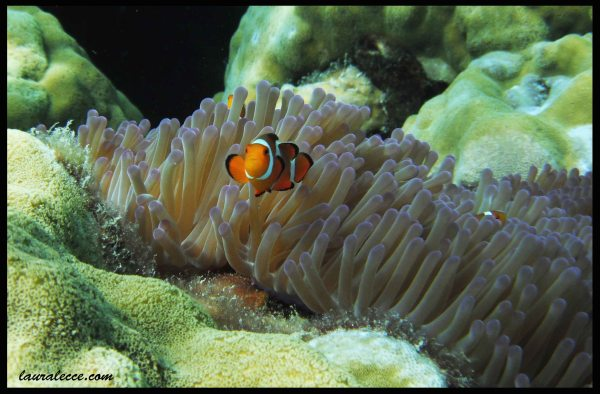 Spot The Clowns - Photograph by Laura Lecce