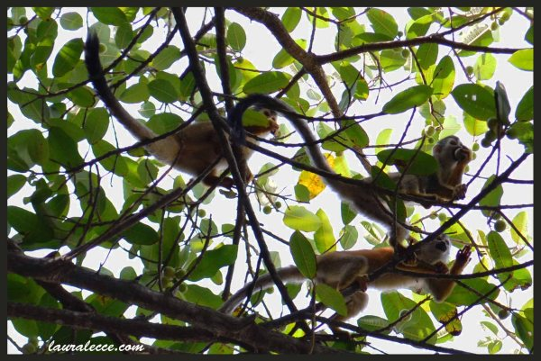 Squirrel Monkeys - Photograph by Laura Lecce