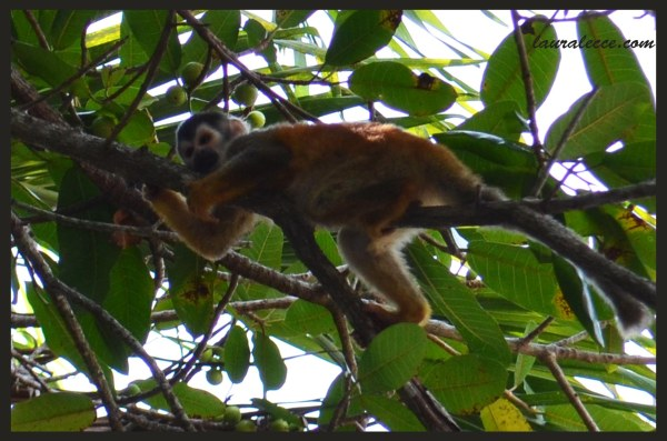 Tired Monkey - Photograph by Laura Lecce
