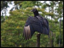 Vulture Parenting