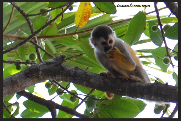 Year of the Monkey - Photograph by Laura Lecce