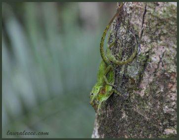 Cuddling Lizards