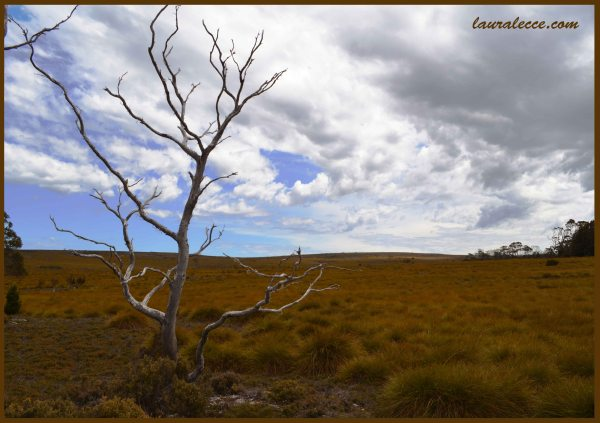 Tasmanian Grasslands - Photograph by Laura Lecce