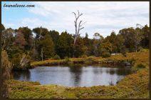 Tasmanian Pond