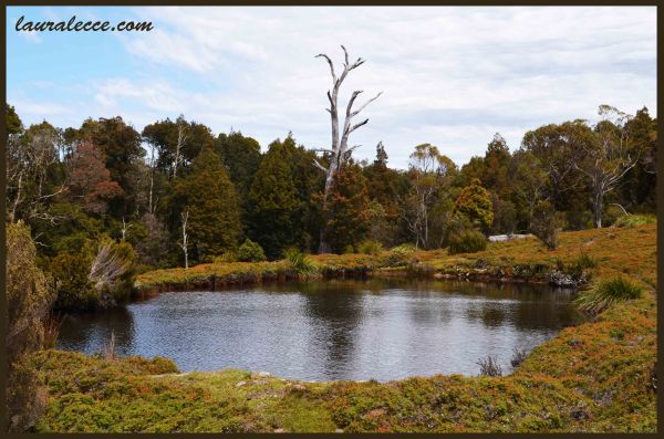 Tasmanian Pond - Photograph by Laura Lecce