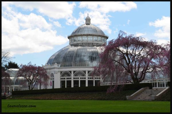 New York Botanical Gardens - Photograph by Laura Lecce
