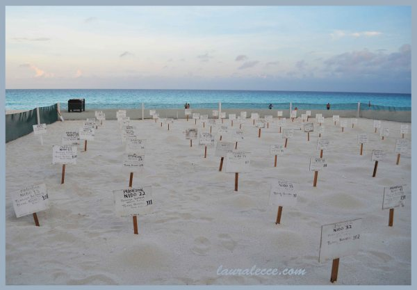 Turtle Hatchery - Photograph by Laura Lecce