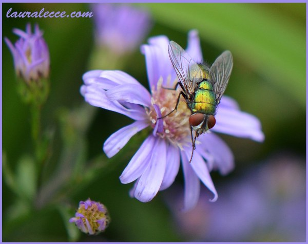 A Flower and a Fly - Photograph by Laura Lecce
