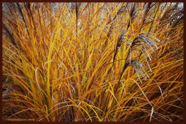 Autumn Grass - Photograph by Laura Lecce