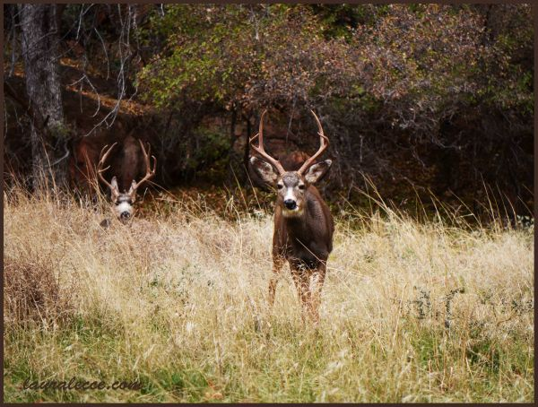 The deer imposter - Photograph by Laura Lecce