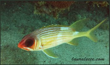 Squirrelfish wants to be friends