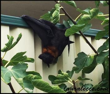 Bat in a bind