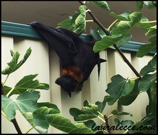 Bat in a bind - Photograph by Laura Lecce