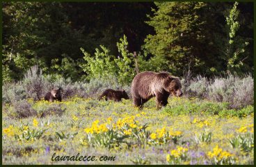 A grizzly and her cubs in a field of flowers