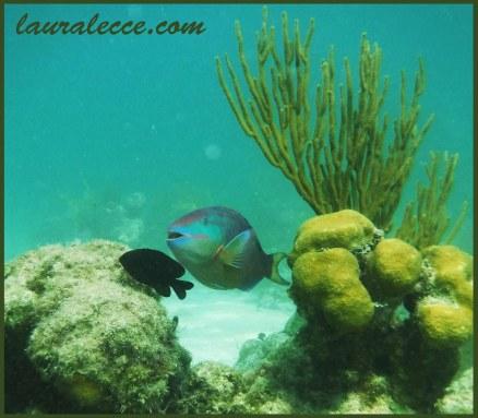 A parrotfish smile