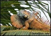 The Orange Iguana