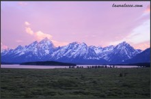 Tetons in pink