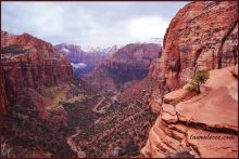 The colorful landscape of Zion