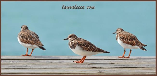 The three seabirds