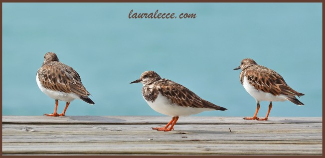 The three seabirds